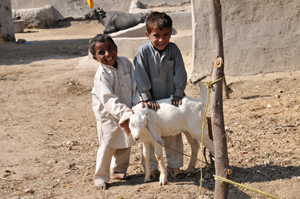 Goats help families earn an income and are an excellent source of protein.