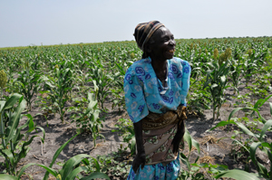 Farmers in Tanzania are growing drought tolerant crops to reduce vulnerability to crop failure.
