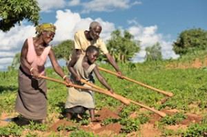 Families in Malawi are improving crops and overcoming hunger