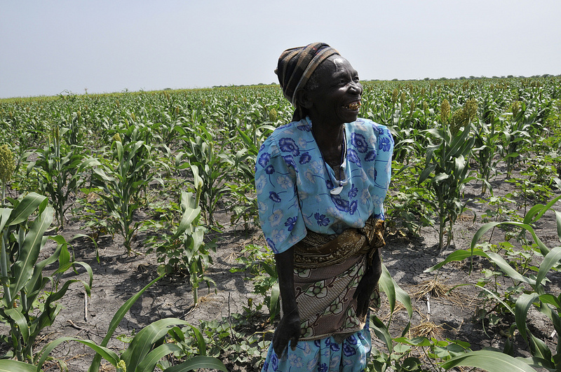 Conservation agriculture is enabling farmers to grow a variety of foods in the dry soil.