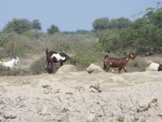 Drought conditions have left families who rely on seasonal farming and livestock in dire situations