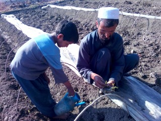 Tasal spent long hours helping his father.