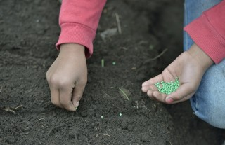 Children plant vegetable garden in Guatemalan highlands