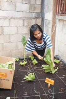 A girl in Guatemala tends to a school garden. Photo: PWS&D