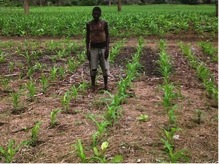 Elias proudly shows off the first signs of life on his conservation agriculture plot.