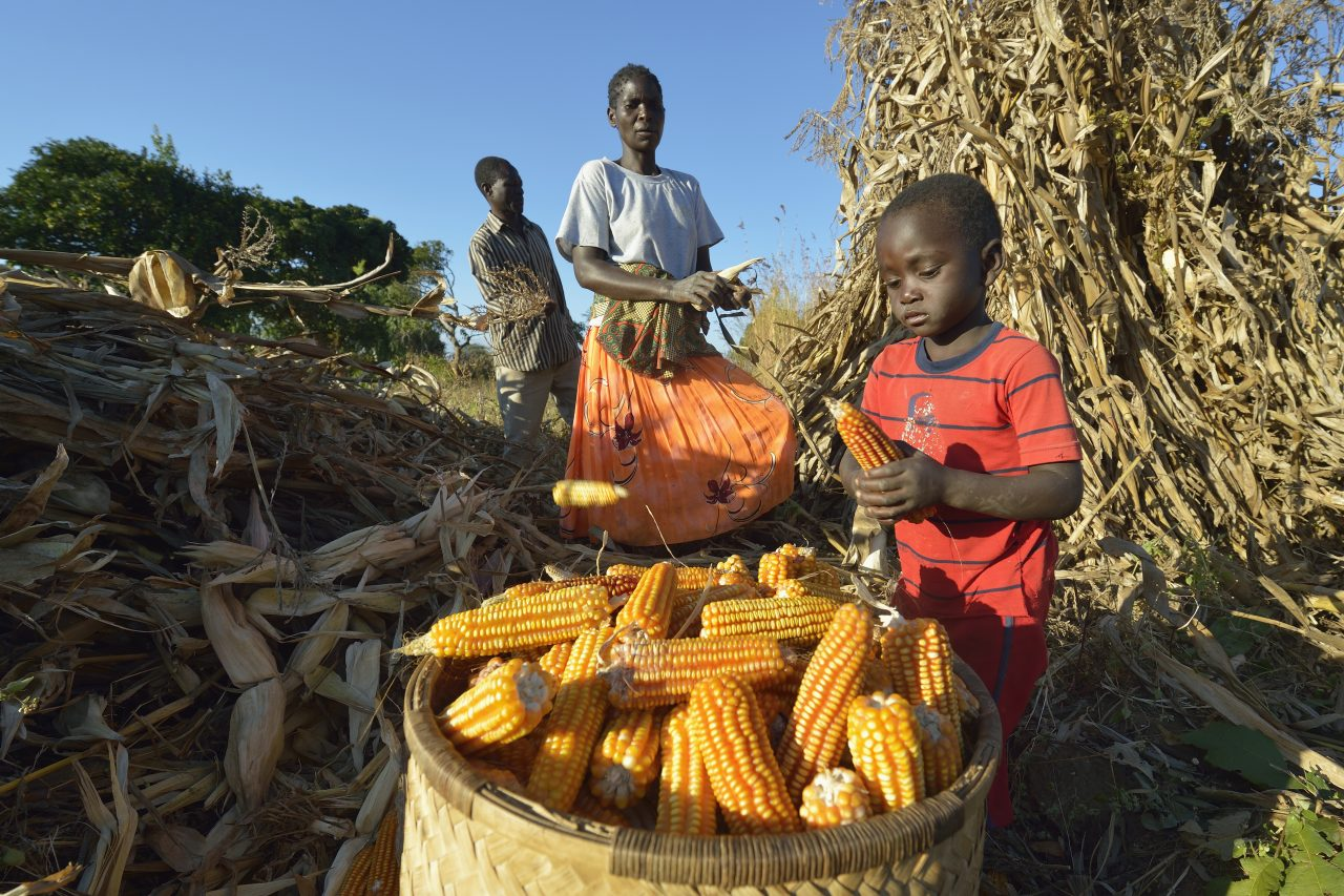 Malawi Food Security 8