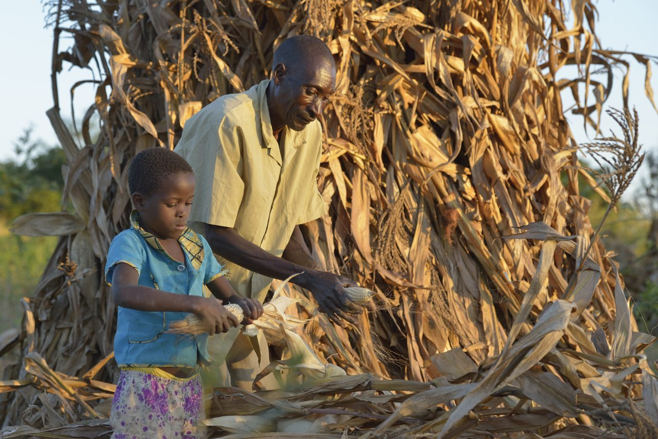 Malawi Food Security 9