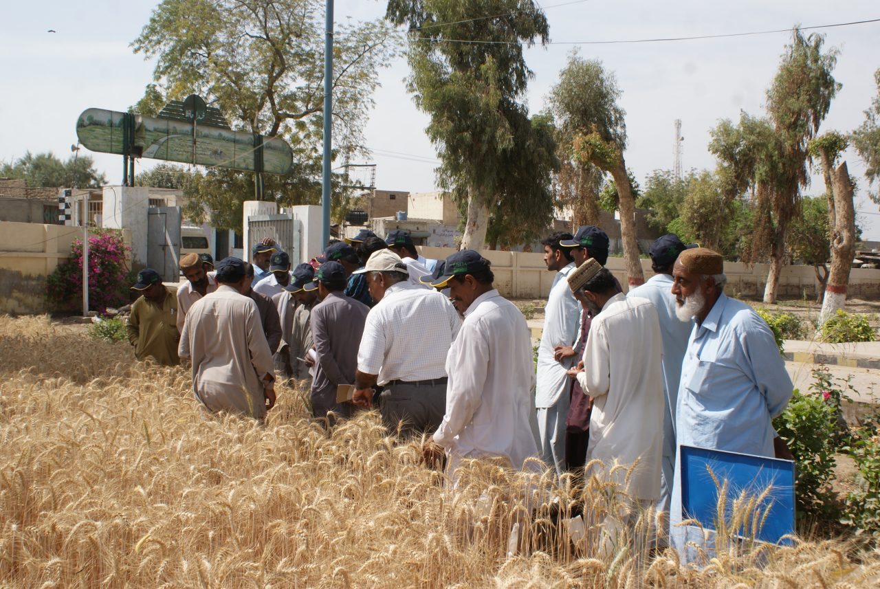 Food Security in Badin, Pakistan 14