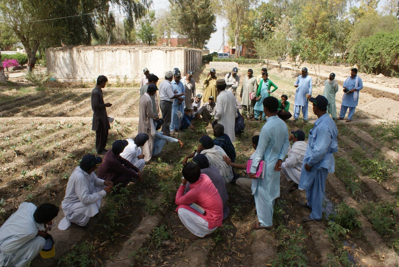 Food Security in Badin, Pakistan 12