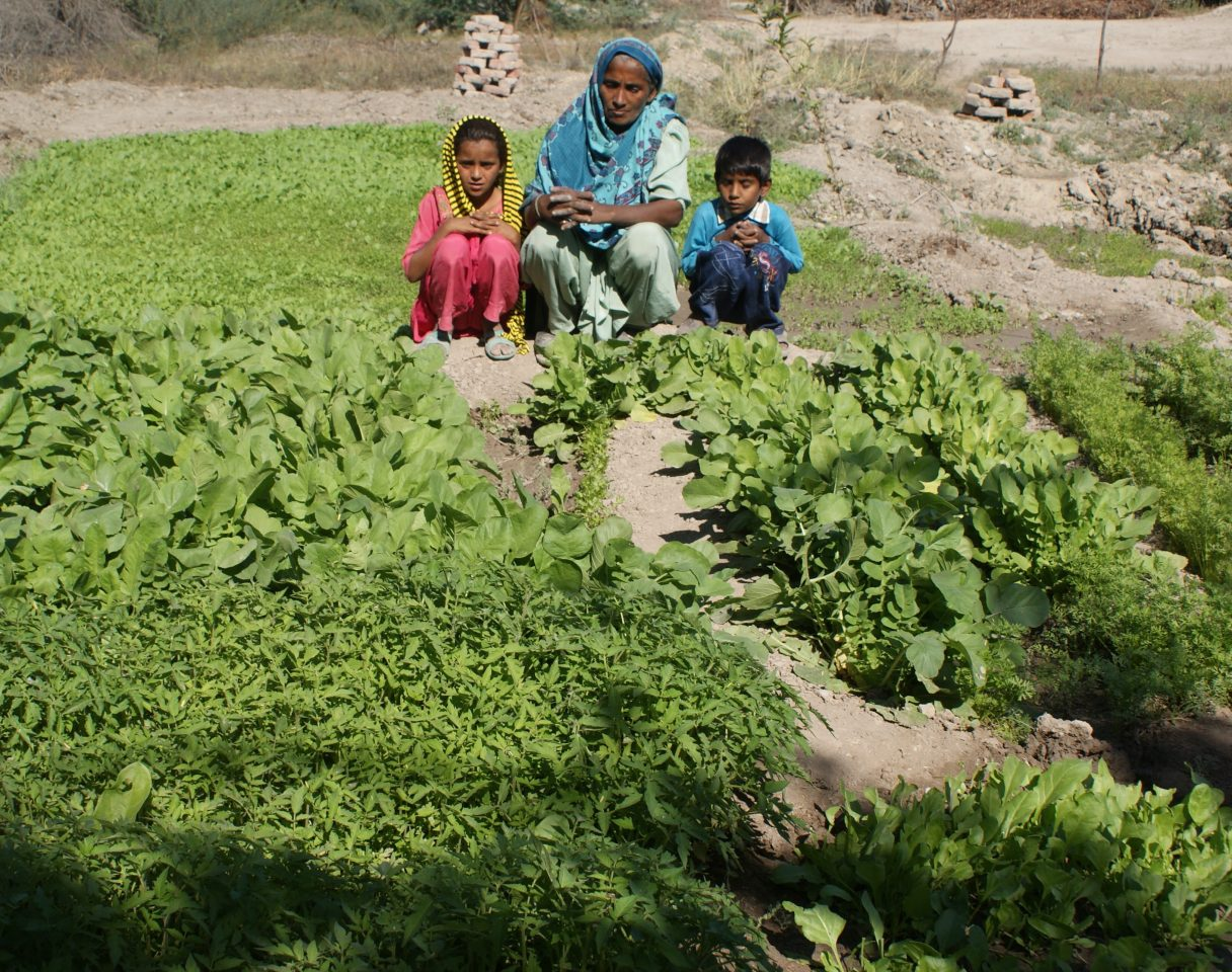 Food Security in Badin, Pakistan 11