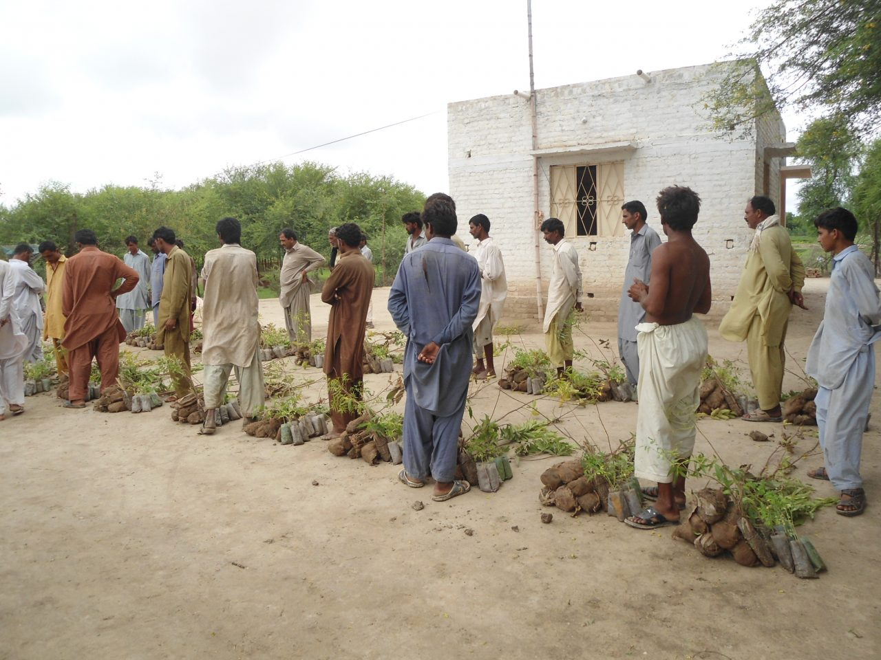 Food Security in Badin, Pakistan 4