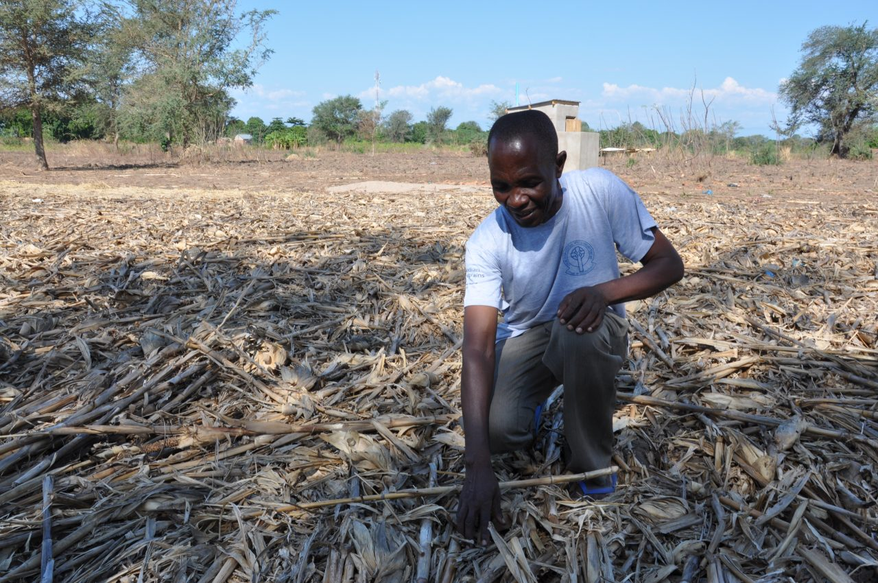 Mpata Conservation Agriculture 3