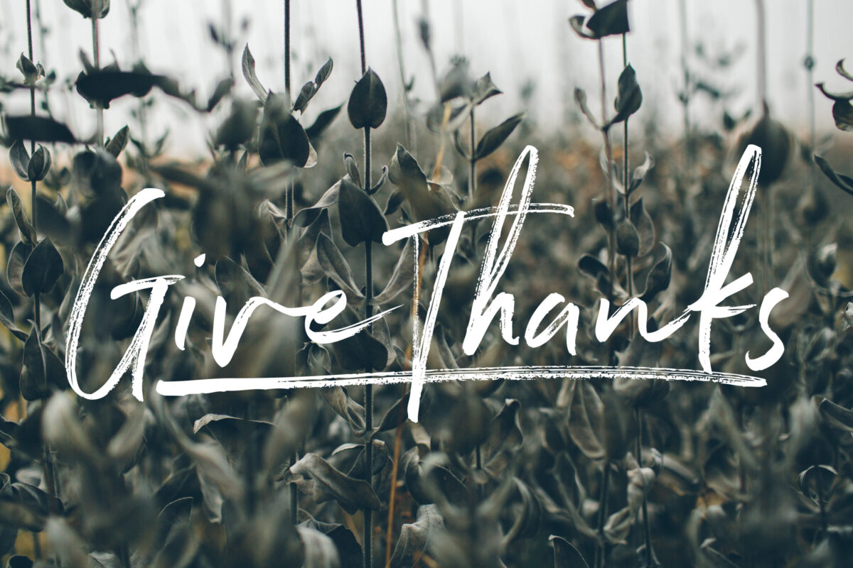 """Cursive """"Give Thanks"""" against a background of a wheat field."""