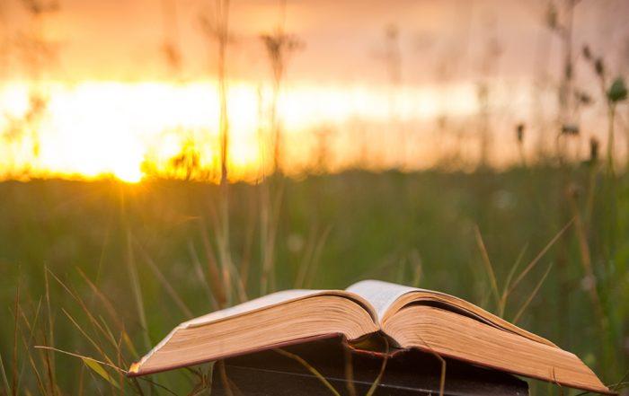 Open bible in a field