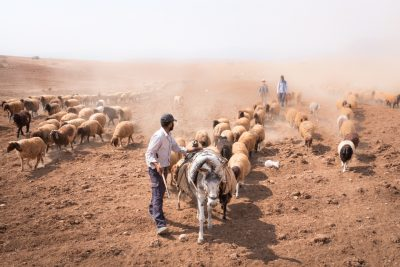 Palestinian shepherds in the Jordan Valley_photo credit-Albin HillertWCC