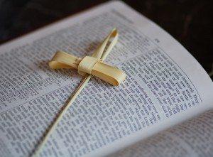 Palm-on-Bible_600